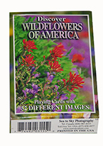 DISCOVER WILDFLOWERS