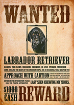 BLACK LAB - WANTED POSTER Dogs Playing Poker, Batman, Bettie Page, Marilyn Monroe, Elvis, Indian Motorcycles, Three Stooges, Marvel, Superman, Spiderman, Iron Man, Captain America, Phillips 66, Farmall, Don?t Tread on Me, Ducks Unlimited, Louisville Slugger, Dukes of Hazard, Flintstone?s. Cowboy by Choice, Cowgirl by Choice, I Love Lucy, Moon Pie, Winchester Rifles, Colt 45, Budweiser, Vince Lombardi, Fender Stratocaster, Ford, Chevy, Mustang, Remington, Jack Daniels, Smith & Wesson, Wizard of Oz, Schonberg, Coke, Coca Cola, Budweiser, Jim Beam, Route 66, Corvette, Ford, I Love Lucy