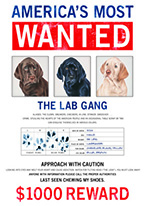 WANTED - THE LAB GANG Dogs Playing Poker, Batman, Bettie Page, Marilyn Monroe, Elvis, Indian Motorcycles, Three Stooges, Marvel, Superman, Spiderman, Iron Man, Captain America, Phillips 66, Farmall, Don?t Tread on Me, Ducks Unlimited, Louisville Slugger, Dukes of Hazard, Flintstone?s. Cowboy by Choice, Cowgirl by Choice, I Love Lucy, Moon Pie, Winchester Rifles, Colt 45, Budweiser, Vince Lombardi, Fender Stratocaster, Ford, Chevy, Mustang, Remington, Jack Daniels, Smith & Wesson, Wizard of Oz, Schonberg, Coke, Coca Cola, Budweiser, Jim Beam, Route 66, Corvette, Ford, I Love Lucy